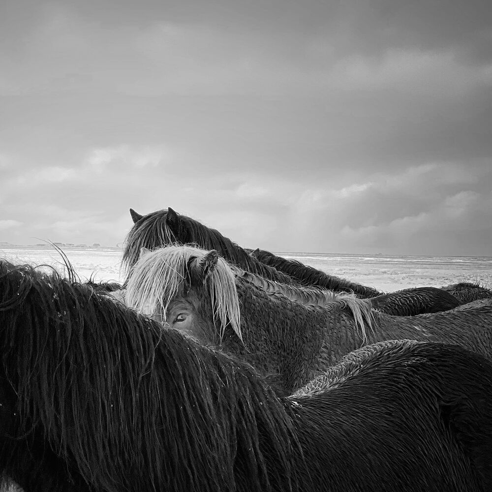 IPPAWARDS 2020 「動物」部門1位入賞作品『Horses in the storm』 Xiaojun Zhang氏(中国)