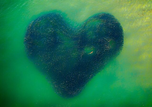 Drone Photo Awards 2020 グランプリ受賞作品『Love Heart of Nature』  Jim Picôt氏